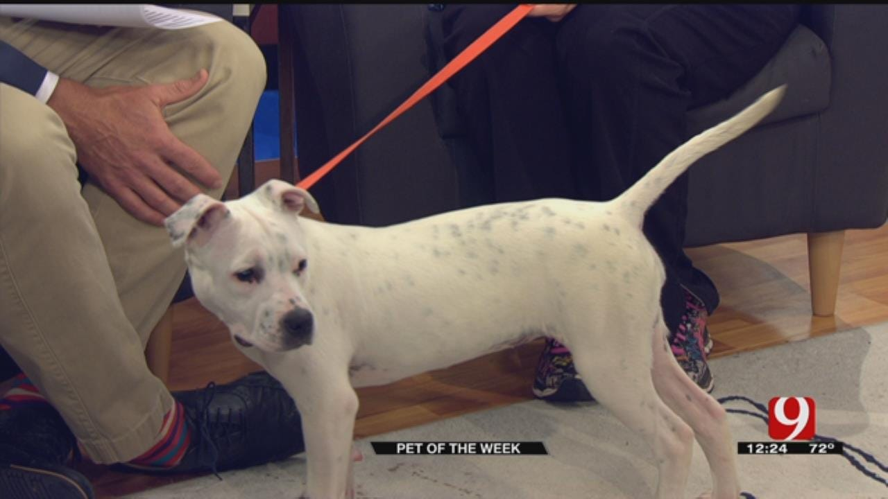 Pet Of The Week: Meet Flour