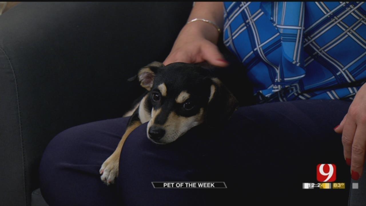 Pet Of The Week: Meet Bubba