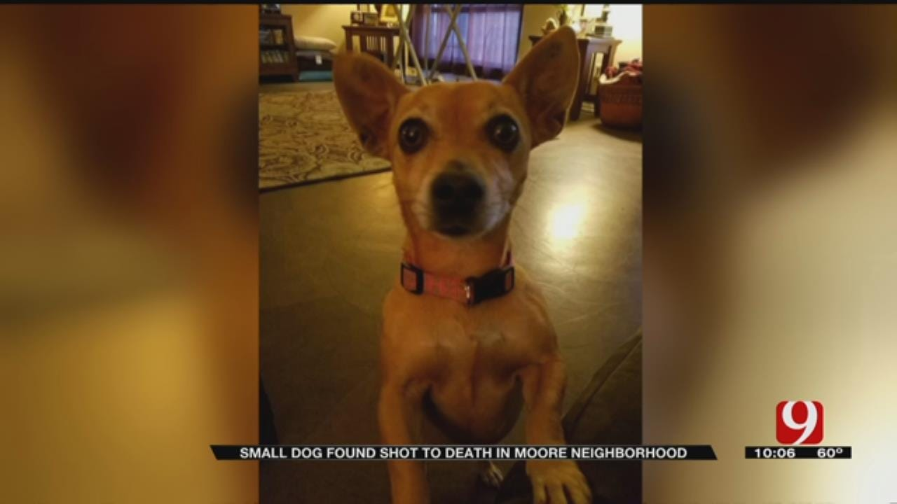 Moore Woman Distraught After Dog Fatally Shot