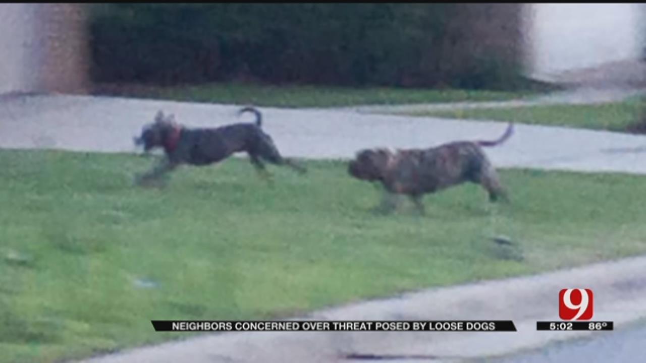 Edmond Residents Say Vicious Dogs Terrorizing Neighborhood