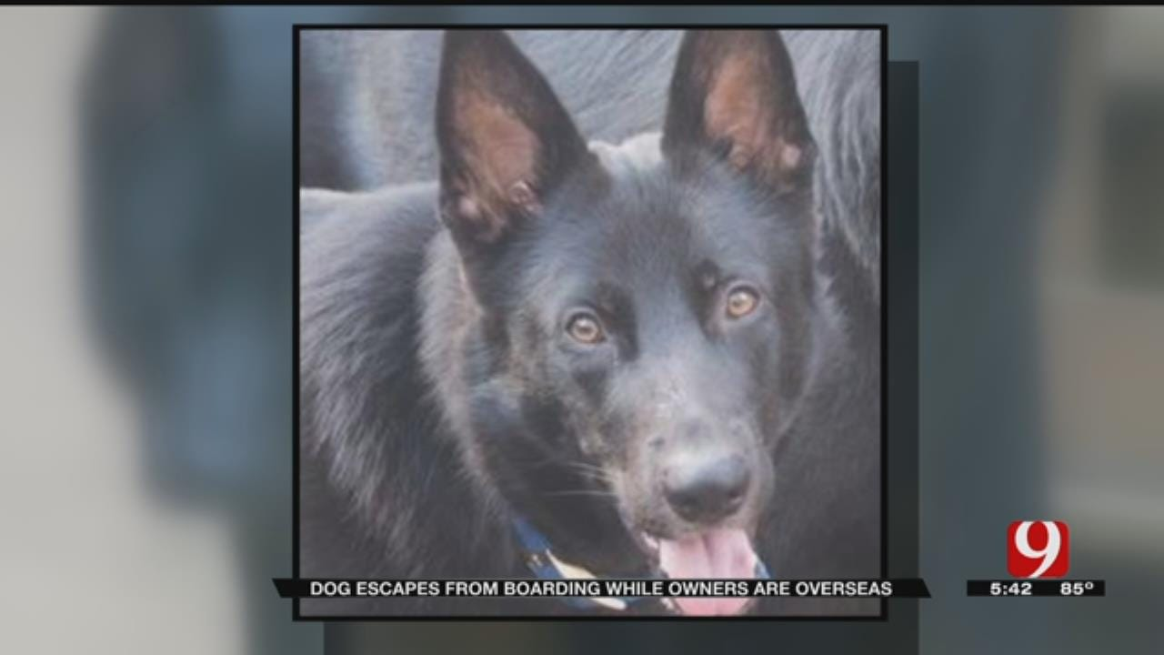 Guthrie Community Joins In Search For Family's Missing Dog