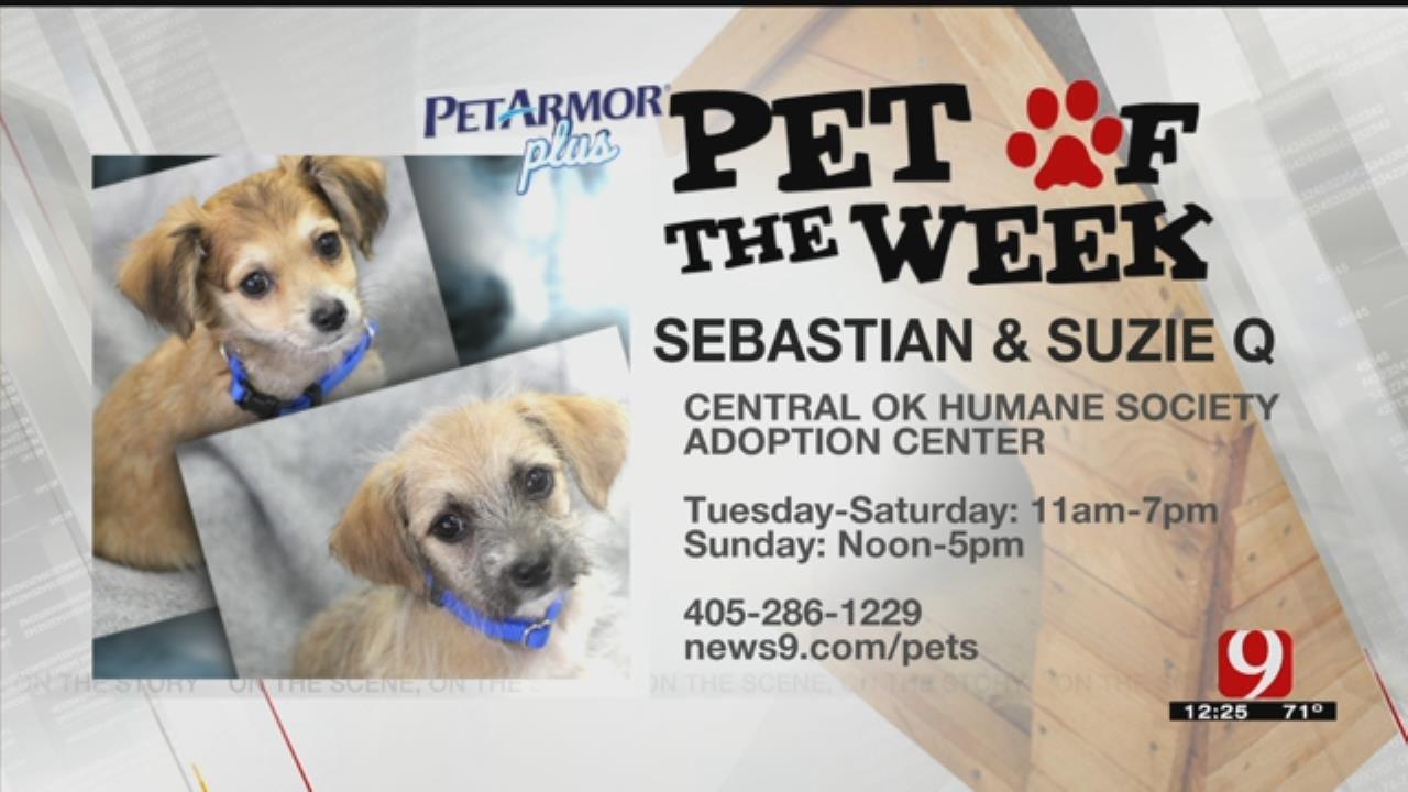 Pets Of The Week: Sebastian & Suzie Q