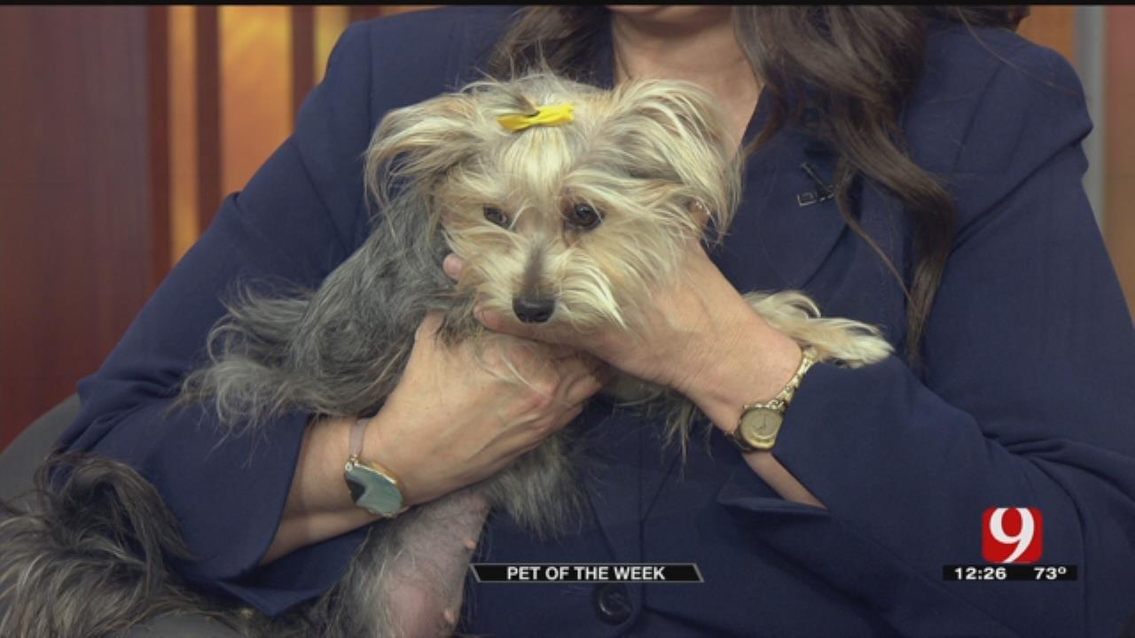 Pet Of The Week: Meet Dolly