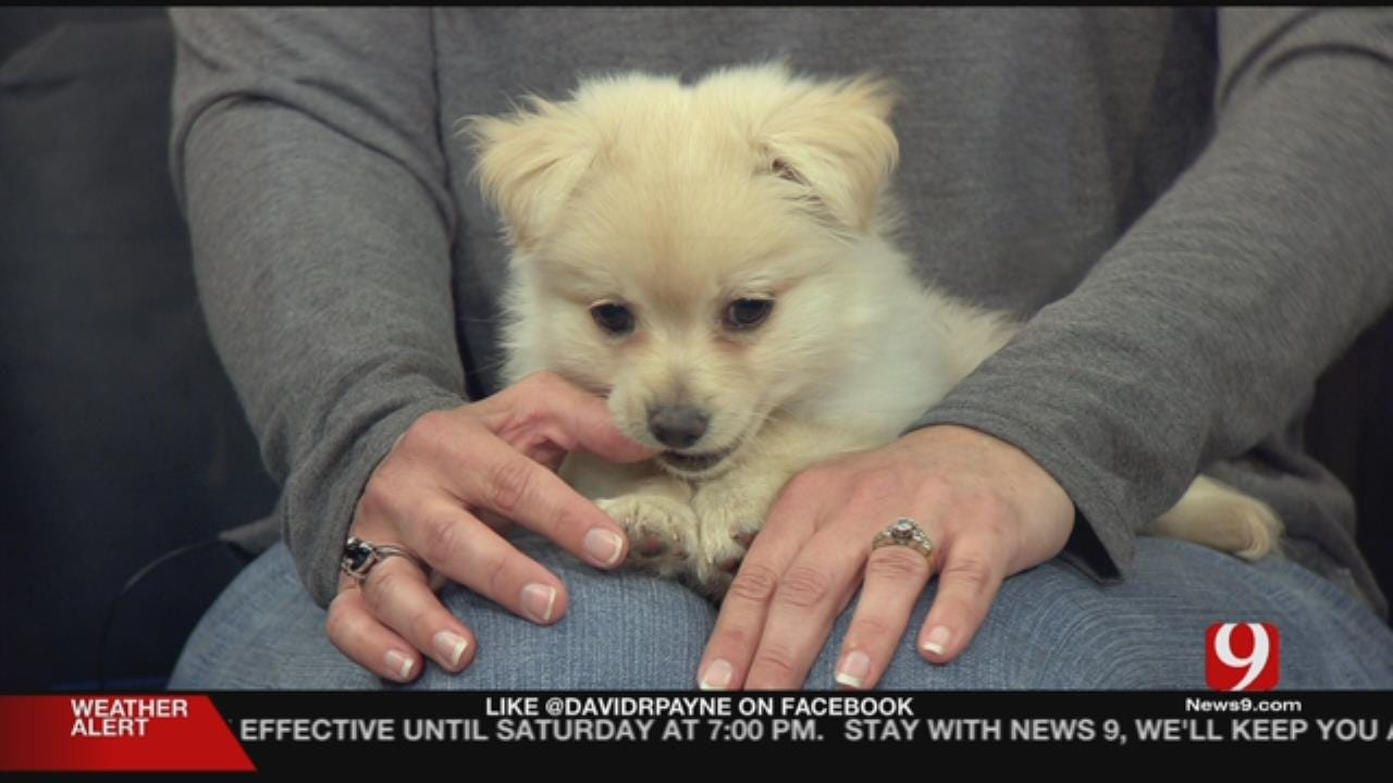 Pet Of The Week: Meet Peanut