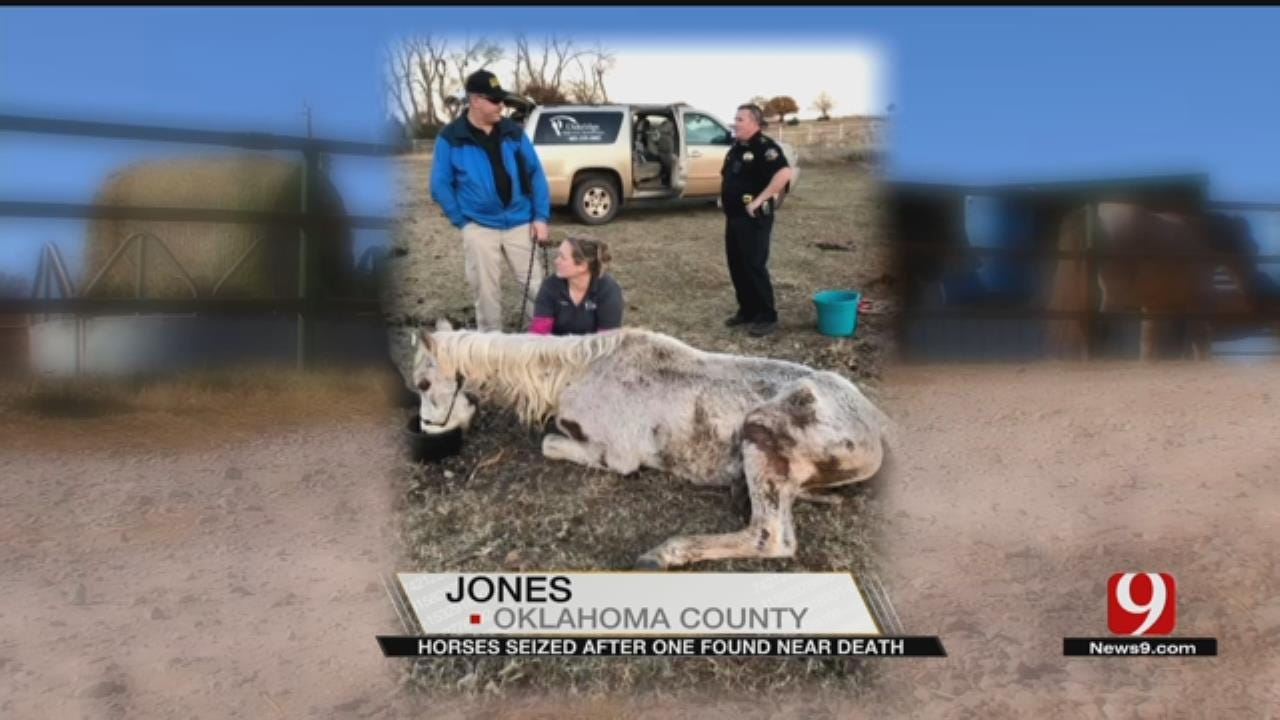 Horses Seized After One Found Near Death In Logan Co.