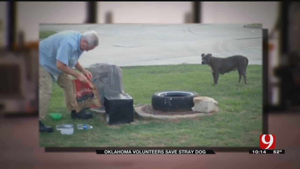Oklahoma Volunteers Save Stray Dog