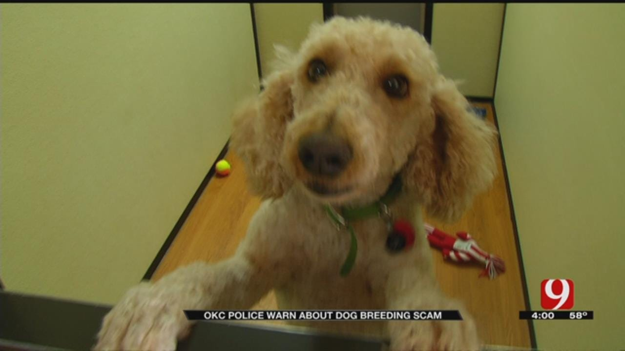 OKC Police Working To Track Down Scam Artists Pretending To Be Dog Breeders
