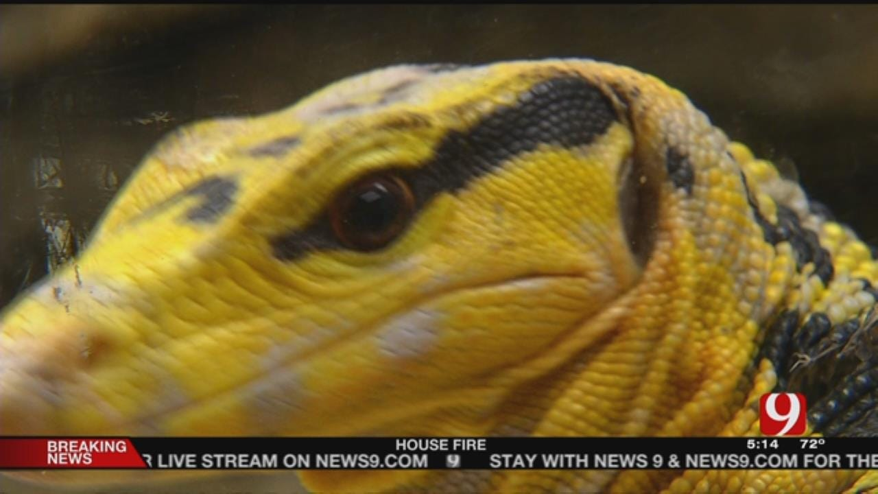 Exotic Reptile Owner In OKC Is Not Letting Charges Stop Him