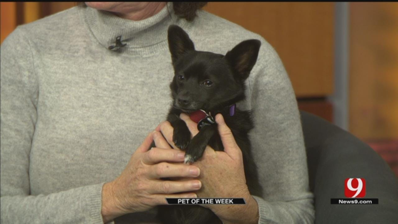 Pet of the Week: Meet Roxy