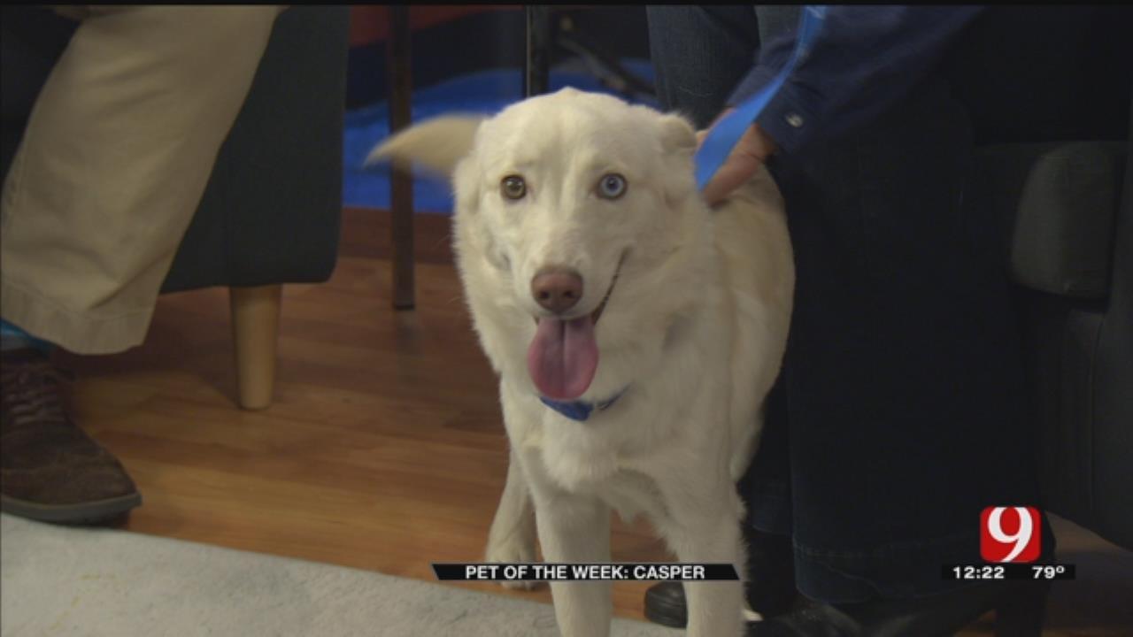 Pet Of The Week: Meet Casper