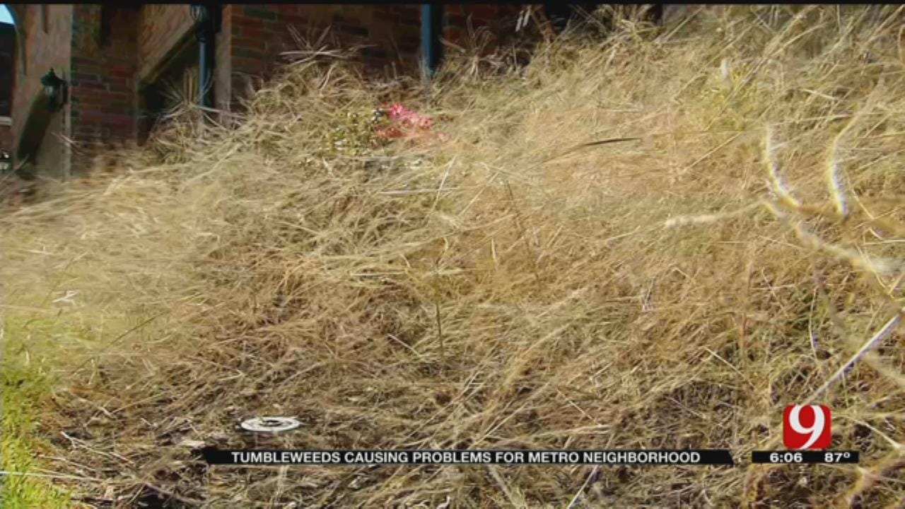 Tumbleweeds Plaguing Residents In West OKC