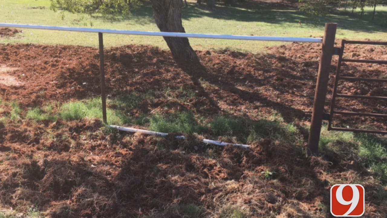 WEB EXTRA: Edmond Couple Fed Up With Feral Pigs Problem