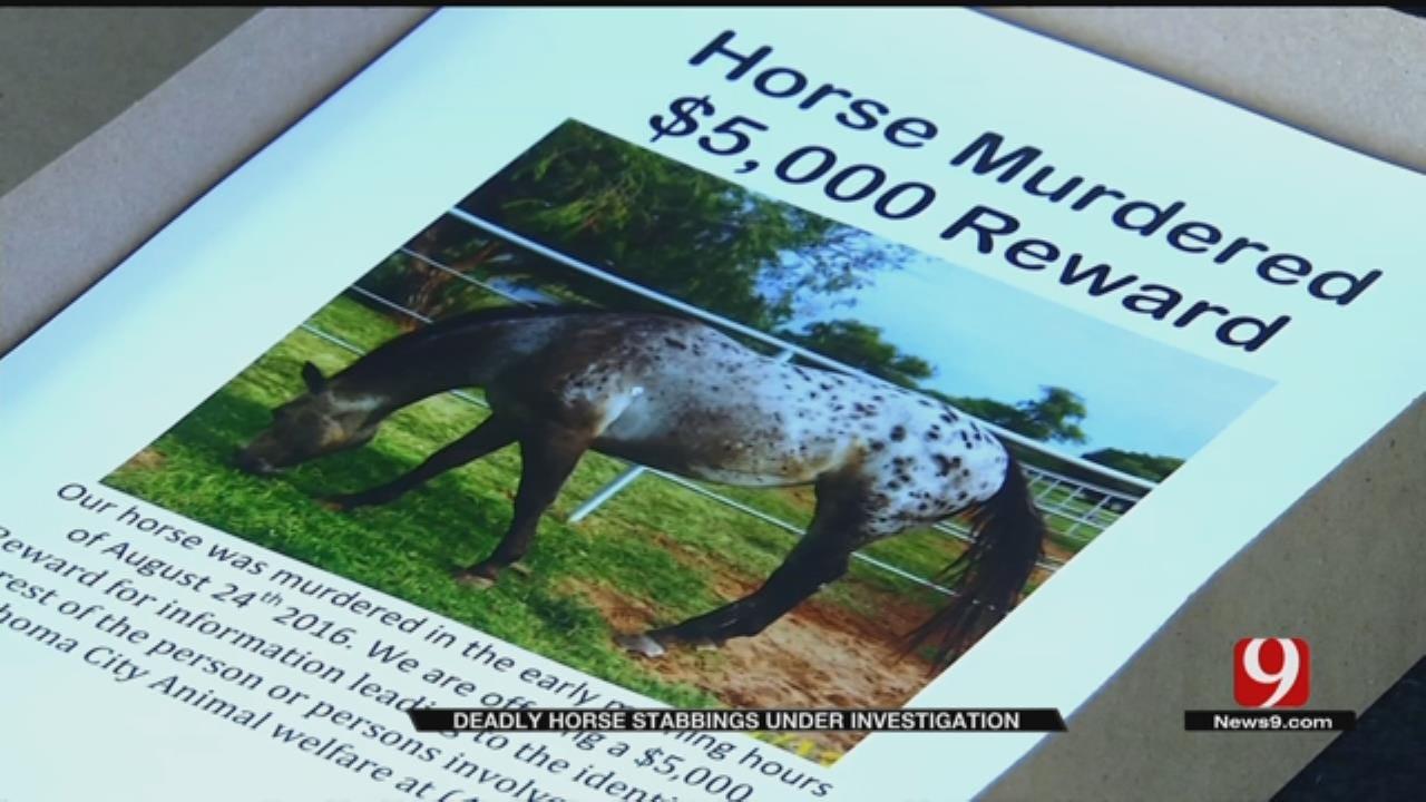OKC Family Offering $5K Reward For Information On Horse Killer