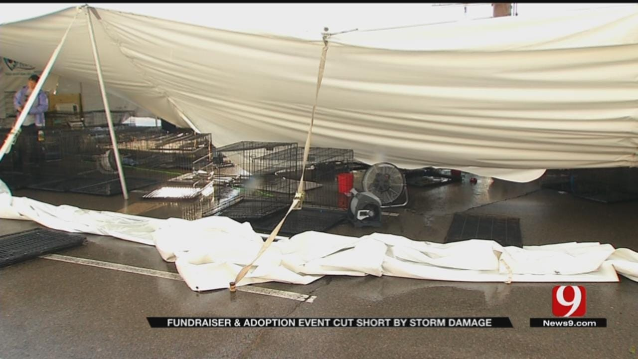 Dog Rescue Fundraiser In Moore Falls Short After Storms