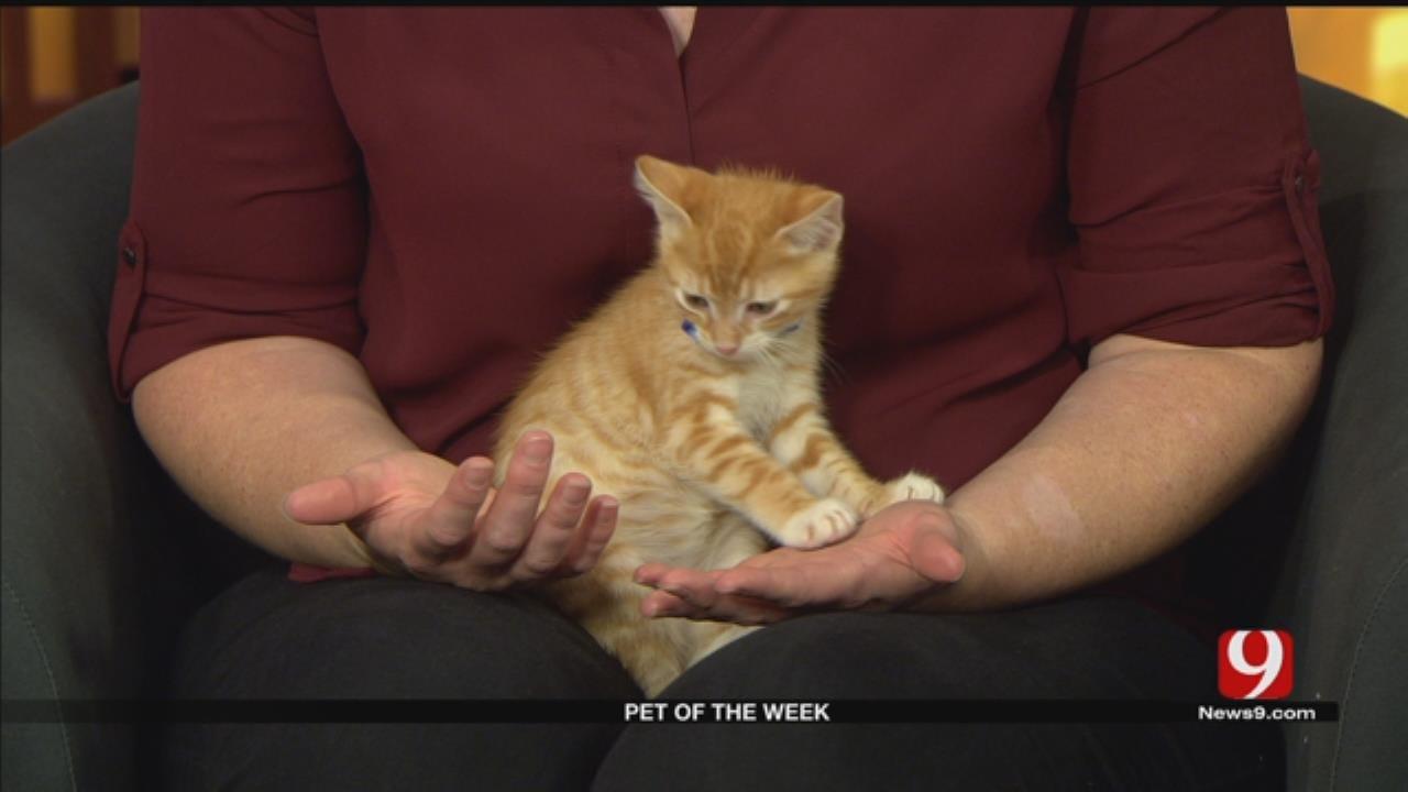 Pet Of The Week: Meet Atticus