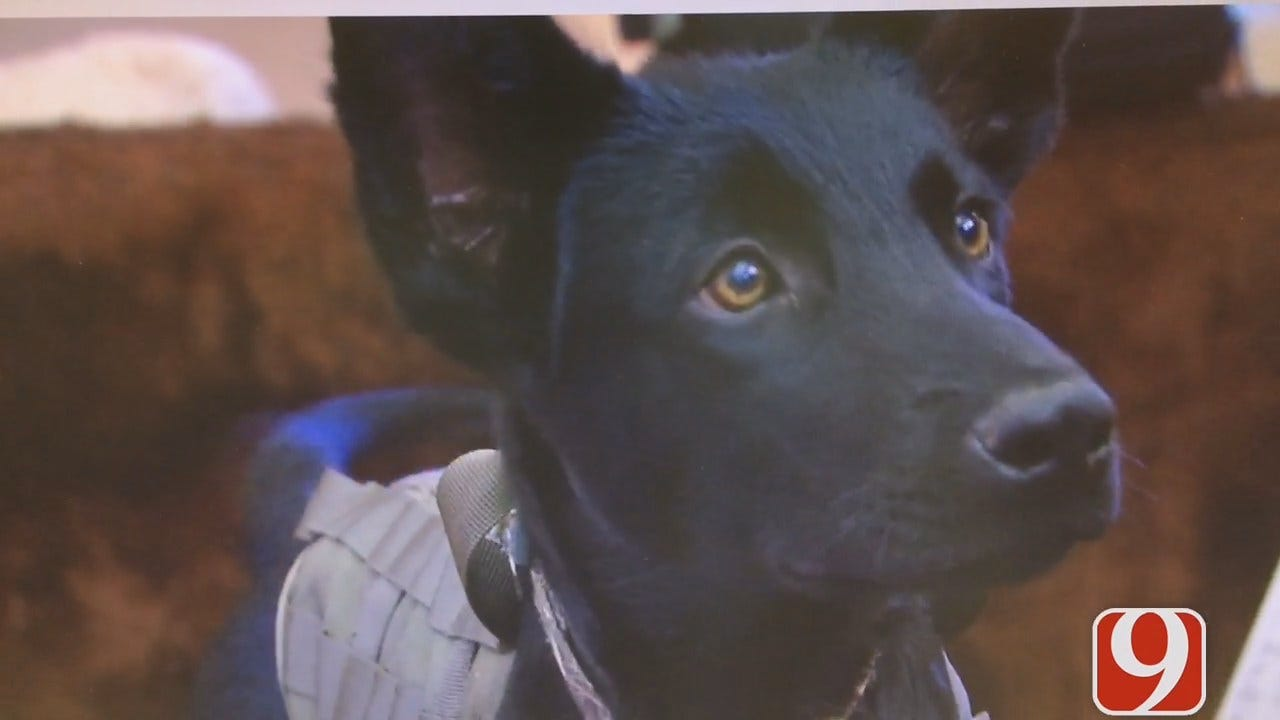 More Groups Stepping Up To Help Army Vet Train Service Dog