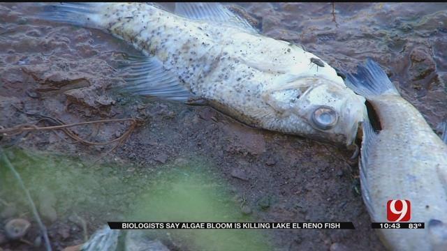 Biologists Say Algae Bloom Is Killing Lake El Reno Fish