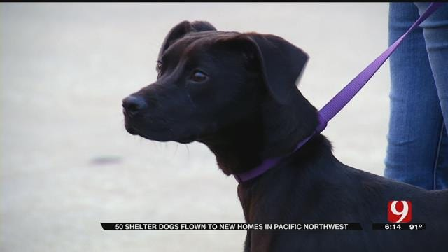 Groups Help Shelter Dogs Find Forever Homes