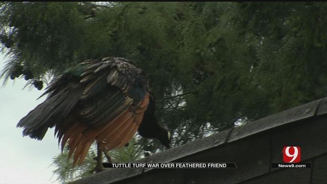 Peacock Sparks Neighborhood Feud In Tuttle