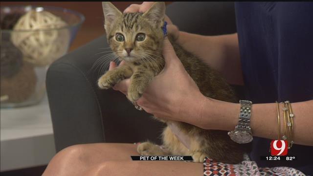 Pet Of The Week: Abby The Kitten