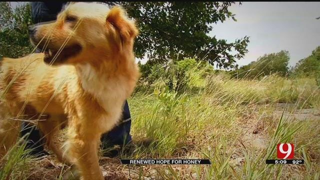 Abandoned Dog Recovering After Being Found Tied Up To Tree