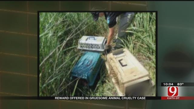 Reward Offered For Information In Gruesome OKC Animal Cruelty Case