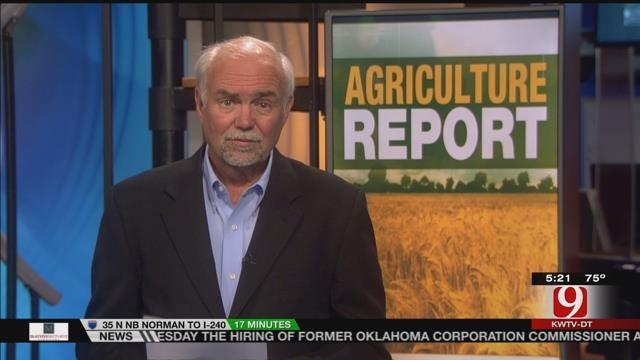 AG REPORT: Corn Crops Emerging