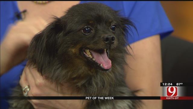 Pet Of The Week: Meet Bub