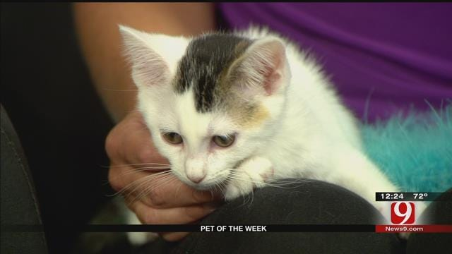 Pet Of The Week, Meet Bunny