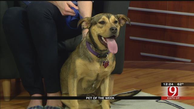 Pet Of The Week: Meet Betty