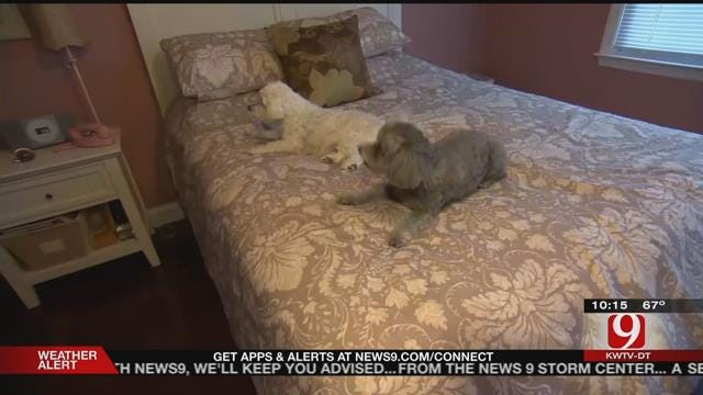 Study Shows Benefits To Sleeping With Pets