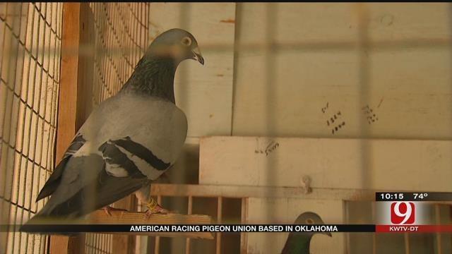 Oklahomans Practice Art Of Pigeon Racing