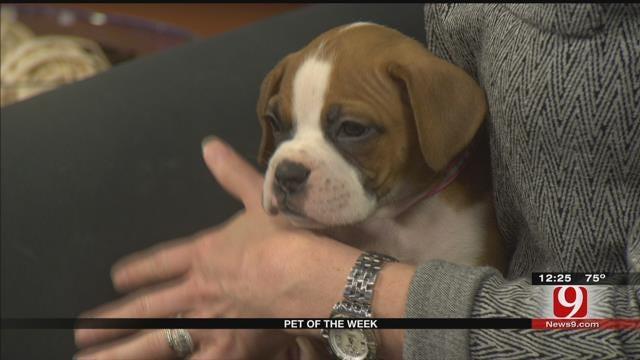 Pet Of The Week: Meet Lola