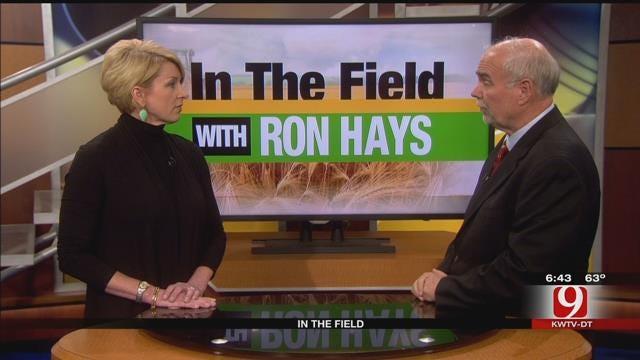 In The Field: Mindy Stitt