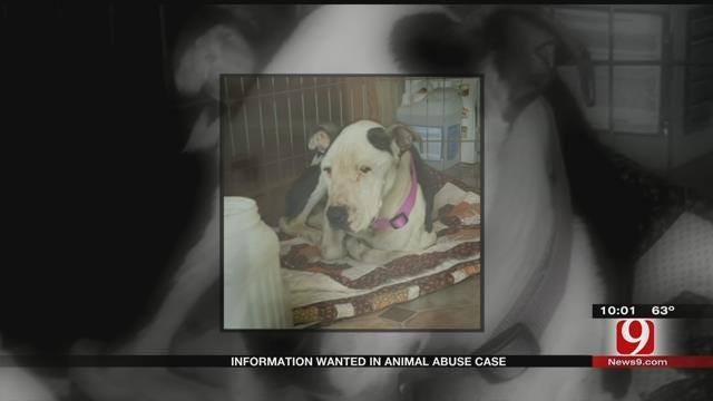 Dog Found Starved, Investigation Underway In Oklahoma County