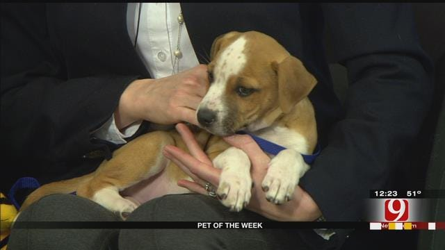 Pet Of The Week: Meet Shaggy