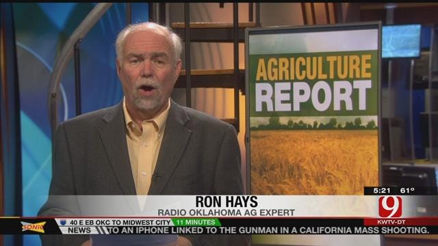 Agriculture Report: Oklahoma Wheat Crop Doing Well