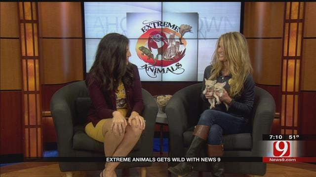 Extreme Animals Gets Wild With News 9
