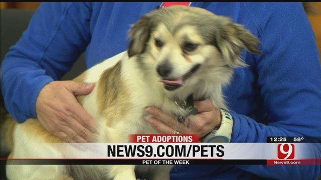Pet Of The Week: Meet Buster