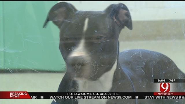 Dog Beaten During A Domestic Available For Adoption Soon