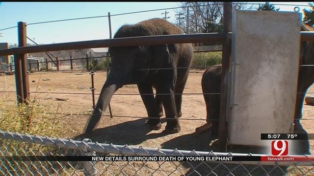 OKC Zoo Releases New Information On Death Of 4-Year-Old Elephant Malee