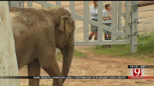 OKC Zoo: Rare Condition Contributed To Elephant's Unexpected Death