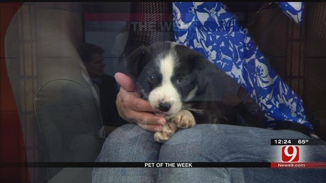Pet Of The Week: Meet Snoopy
