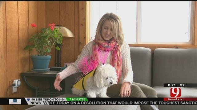 Special Coat Designed To Protect Your Dog From Coyotes