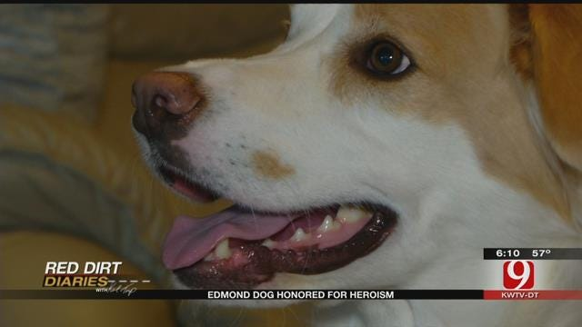 Red Dirt Diaries: Edmond Dog Honored For Heroism
