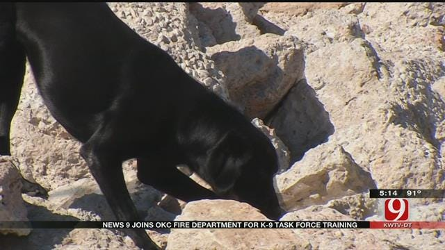OKC Search, Rescue K-9s Train Weekly