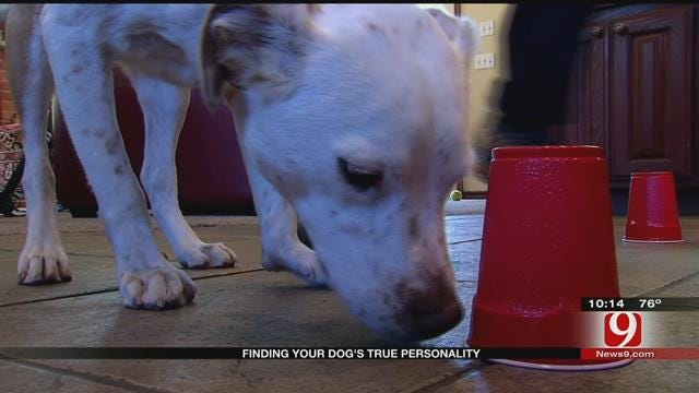 News 9 Anchors Reveal Their Dogs' Unique Minds