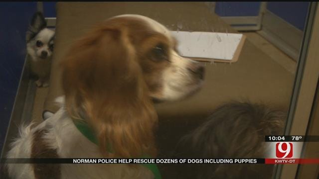 65 Dogs Rescued From Norman Home Are In Decent Health