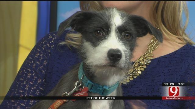Pet Of The Week: Meet Daisy