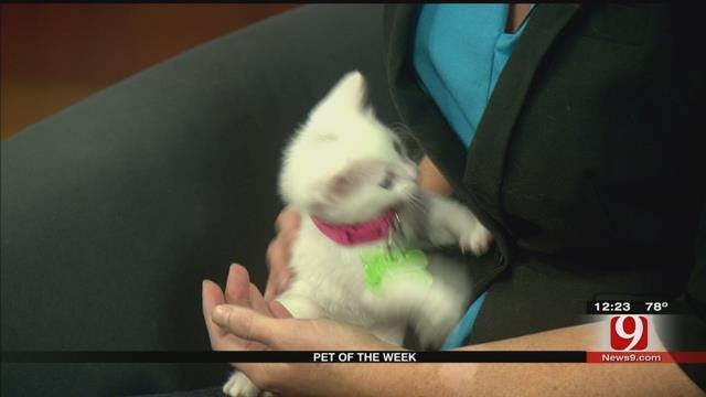 Pet Of The Week: Meet Spot